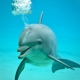 Dolphins make underwater bubble rings just for fun!