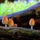 Fantastic Fungi: The Spirit of Good