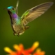Wings of Life: The Hidden Beauty of Pollination