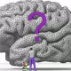 Why Do We Have Brains?